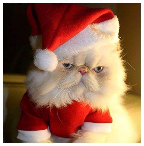 Espressione poco convinta di questo micione vestito da Babbo Natale.