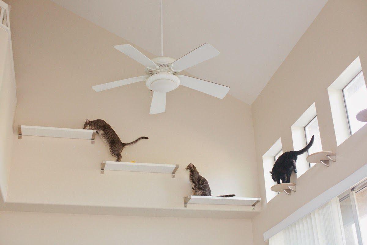 Case da gatti tra design e soluzioni geniali fai contento for Mensole per gatti ikea