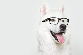 Come vedono il mondo i nostri cani?