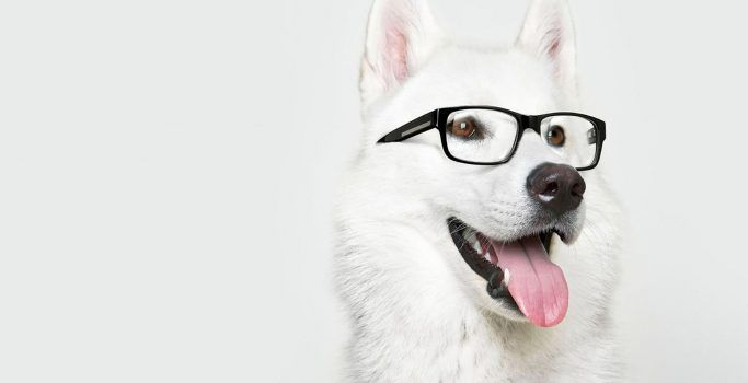 Animals_Dogs_Dog_with_Glasses_034634_