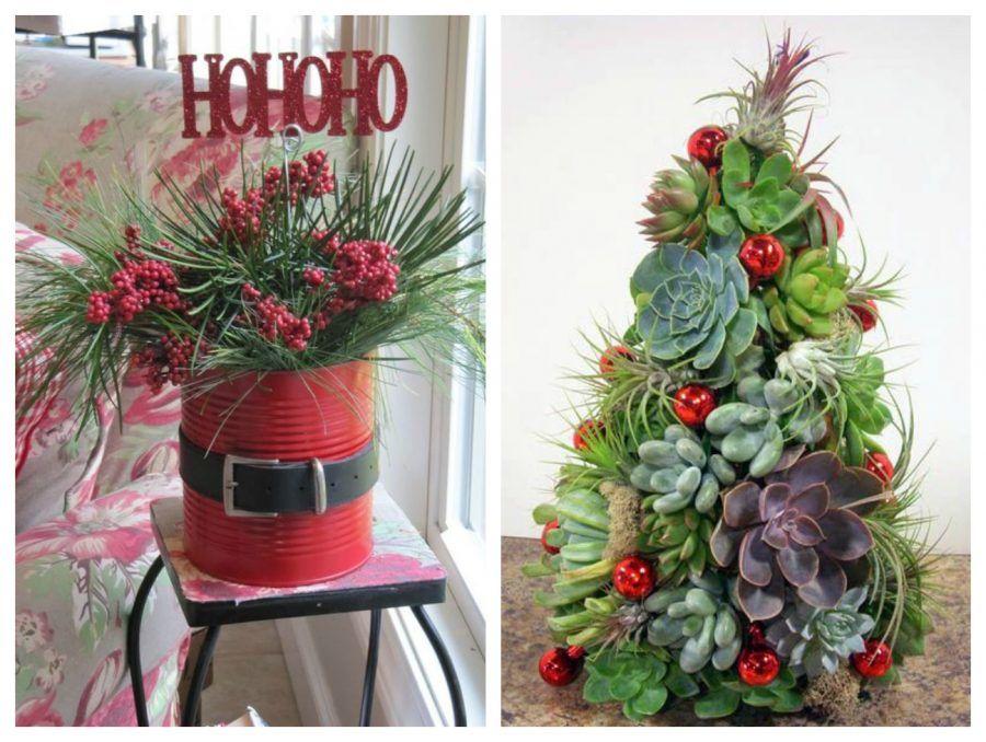 Confezioni Piante Natalizie : Decori natalizi in verde dalle piante di casa ai