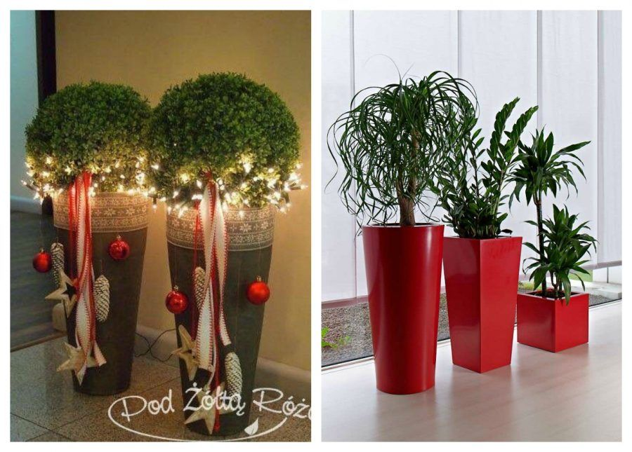 Decori natalizi in verde dalle piante di casa ai decori - Vasi decorati fai da te ...