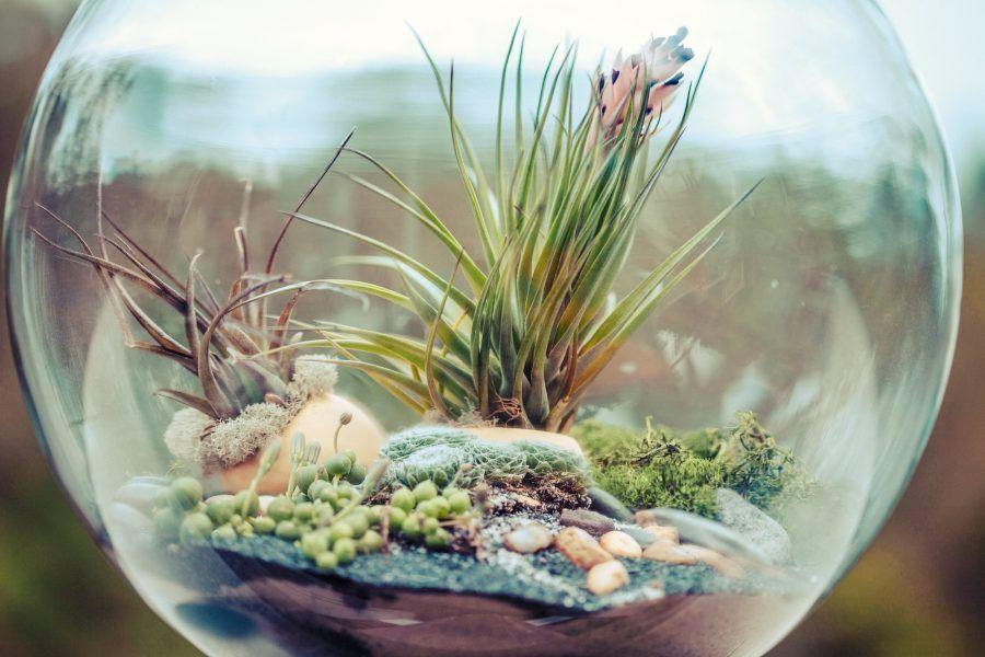 Composizione Piante Grasse In Vaso Di Vetro.Micro Giardini Ecco La Nuova Tendenza Green Bigodino