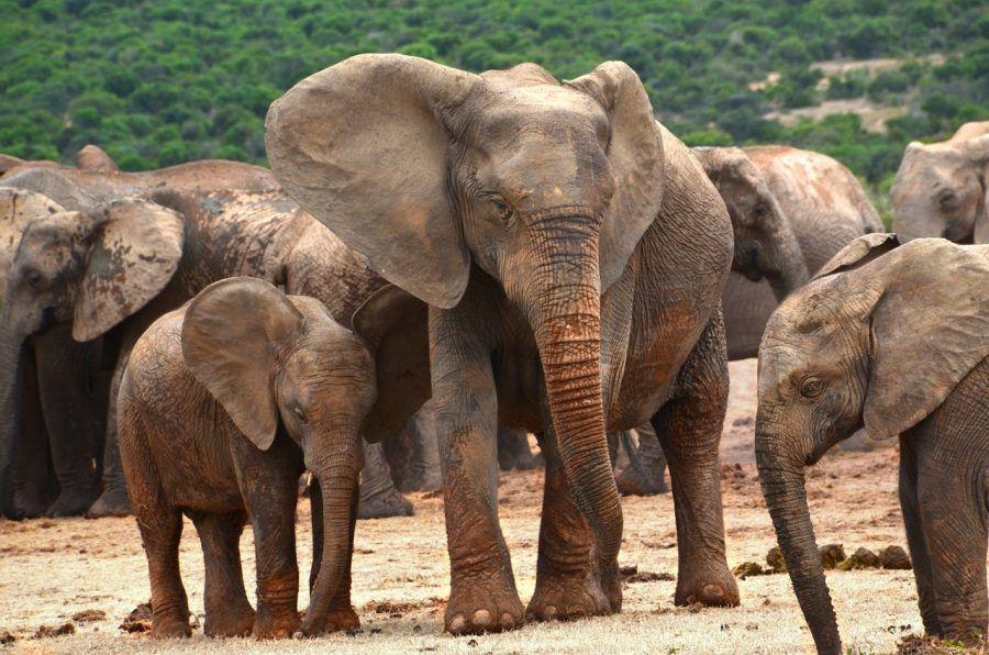 africa-1680412_1280