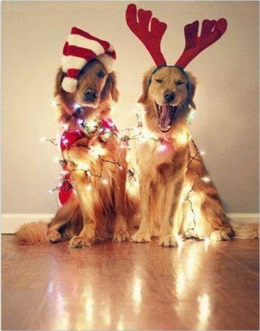Una coppia vincente e decisamente natalizia.