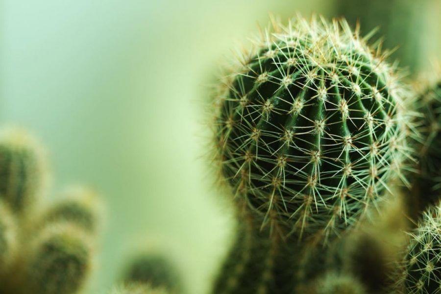 ...un cactus è (quasi) per sempre...