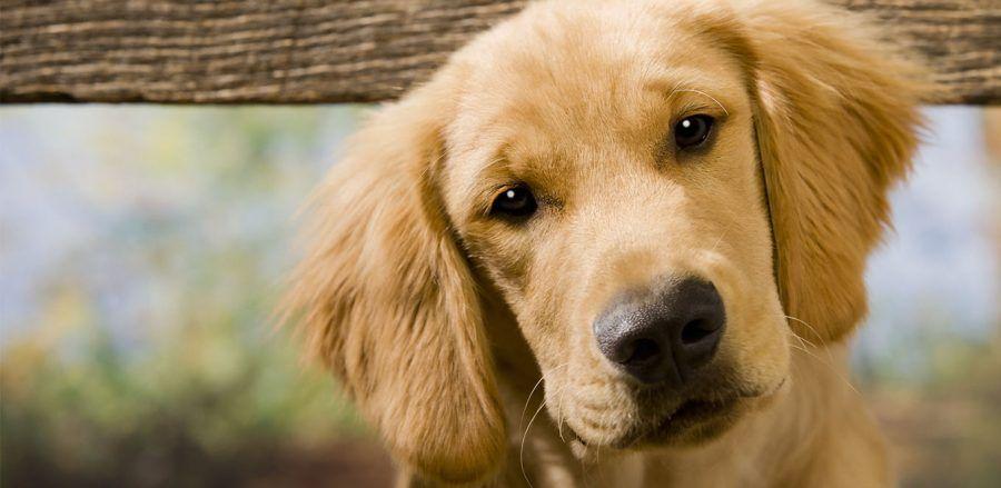 Se il vostro cane vi segue sempre al bagno vi sta dicendo for Cani che non vogliono fare il bagno
