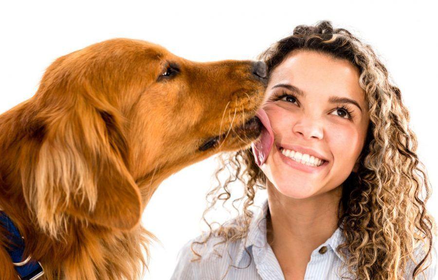 ...fossi un cane mi leccherei anche i gomiti...