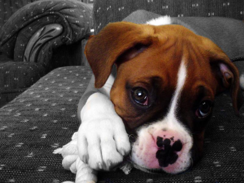 L'amore di un cane...