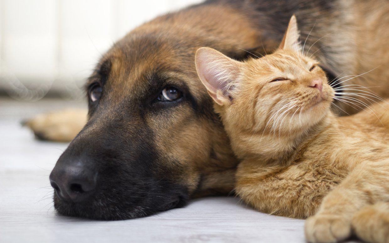 Come aiutare cani e gatti vittime del terremoto