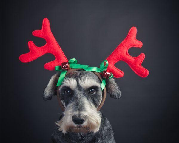 Un po burbero? Non con le corna da super renna di Natale!