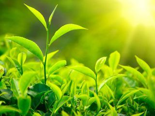 colore-pantone-2017-greenery