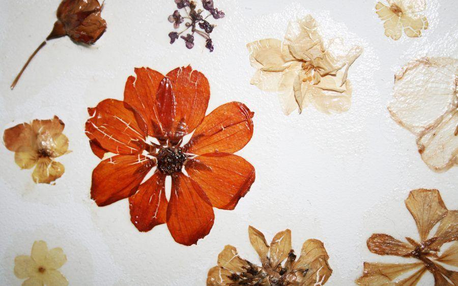 Come essiccare fiori ed erbe