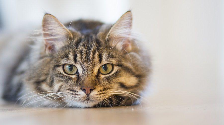 Quando vaccinare il gattino?