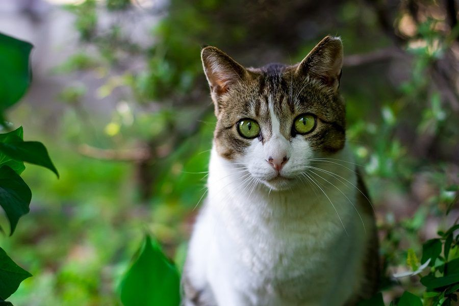 Un gatto in mezzo alla natura
