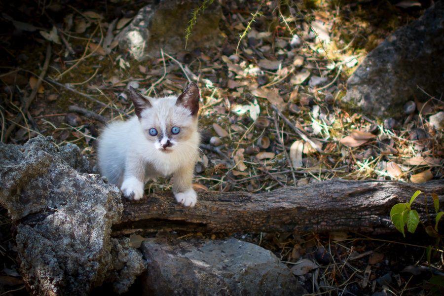 kitten-1665864
