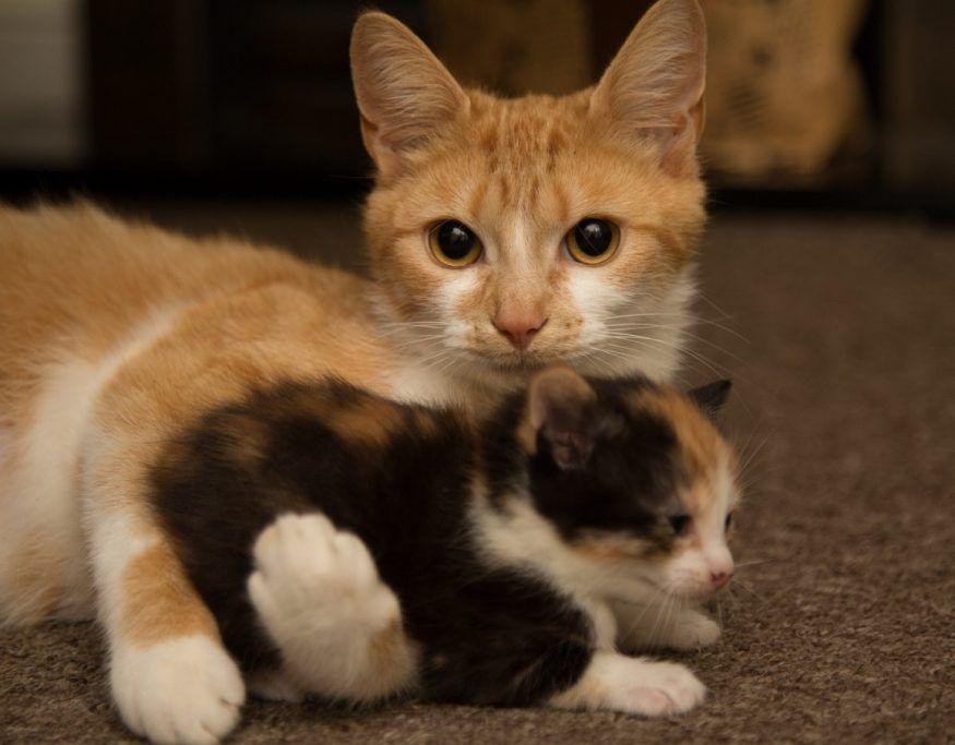 mamma-gatto