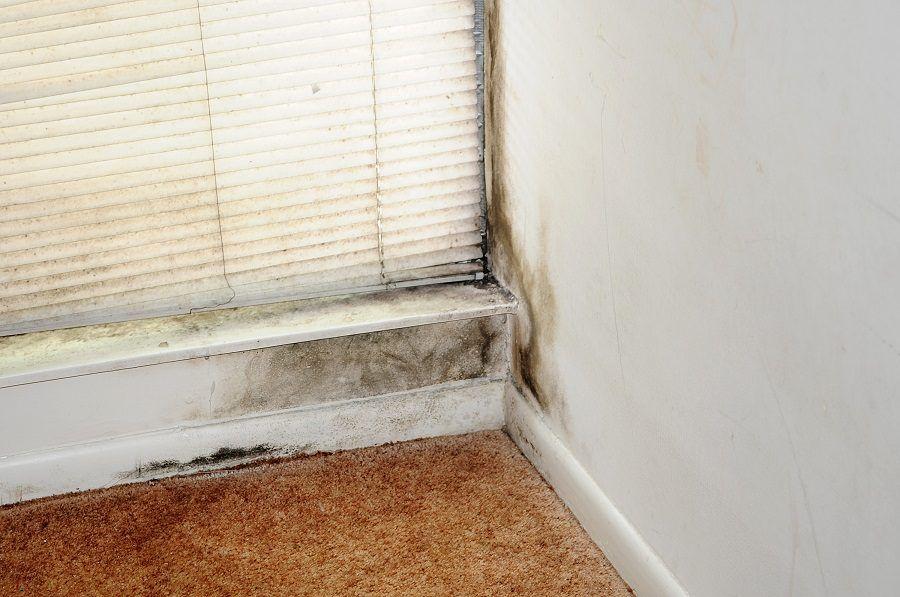 Troppa umidità in casa provoca muffa sulle pareti
