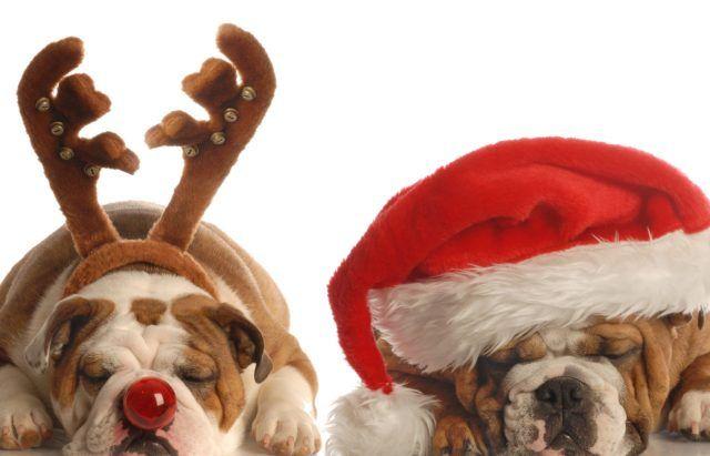 Corna e cappello di Natale, limportante è dormire.
