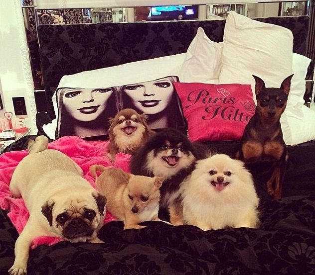 I cani di Paris Hilton