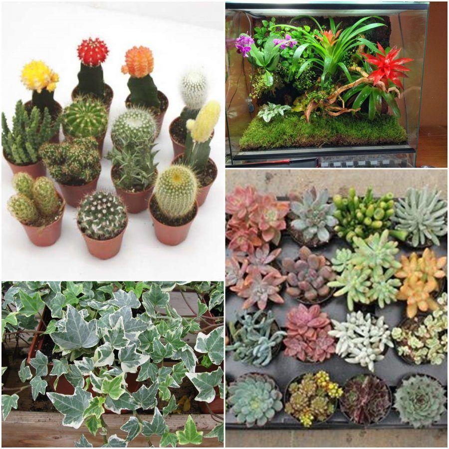 Micro giardini, ecco la nuova tendenza green  Bigodino