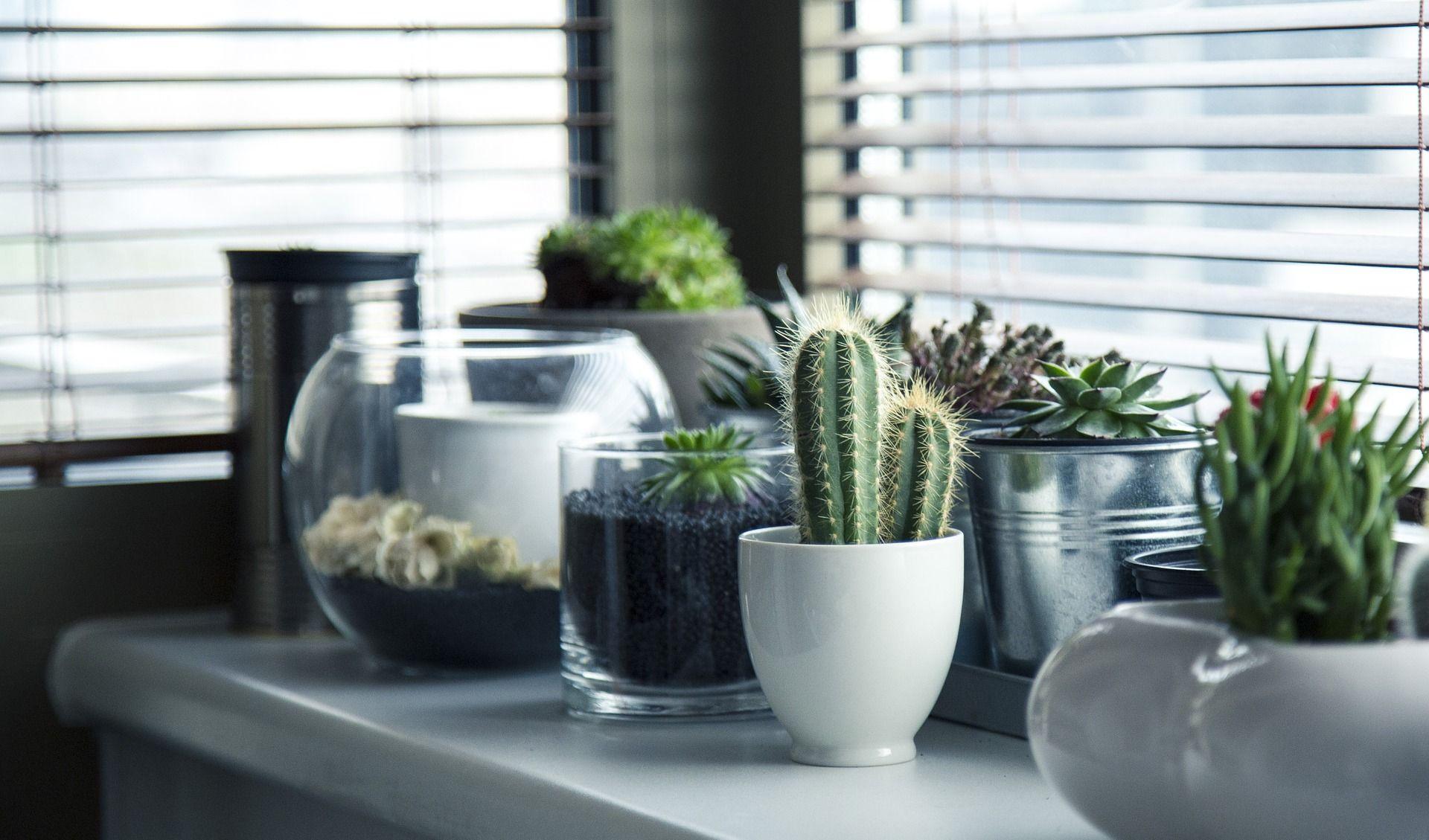 creare un micro giardino fai da te