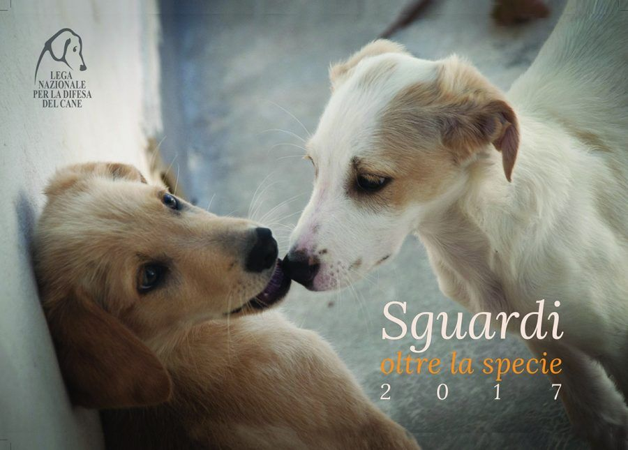 Calendario 2017 La Lega del Cane