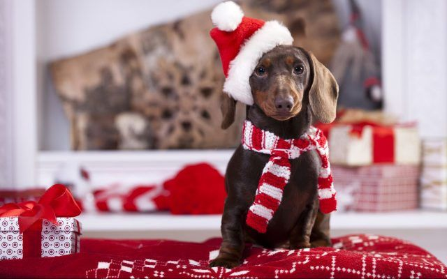Cappellino e fiocco di Natale.