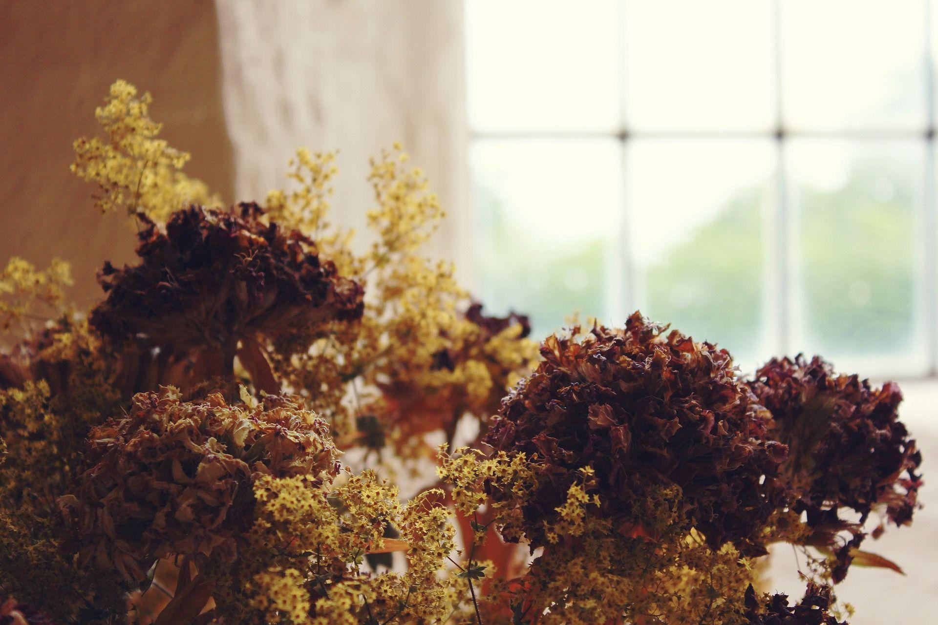 Come arredare casa con i fiori secchi