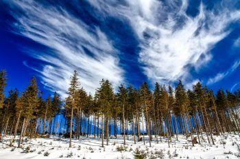 Parchi naturali e riserve in Italia: scopri la magia della natura in inverno
