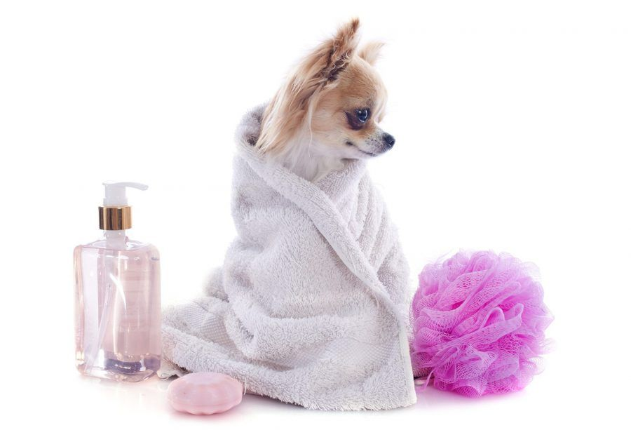 spa-per-cani