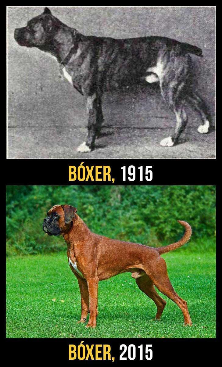 cani-100-anni-evoluzione
