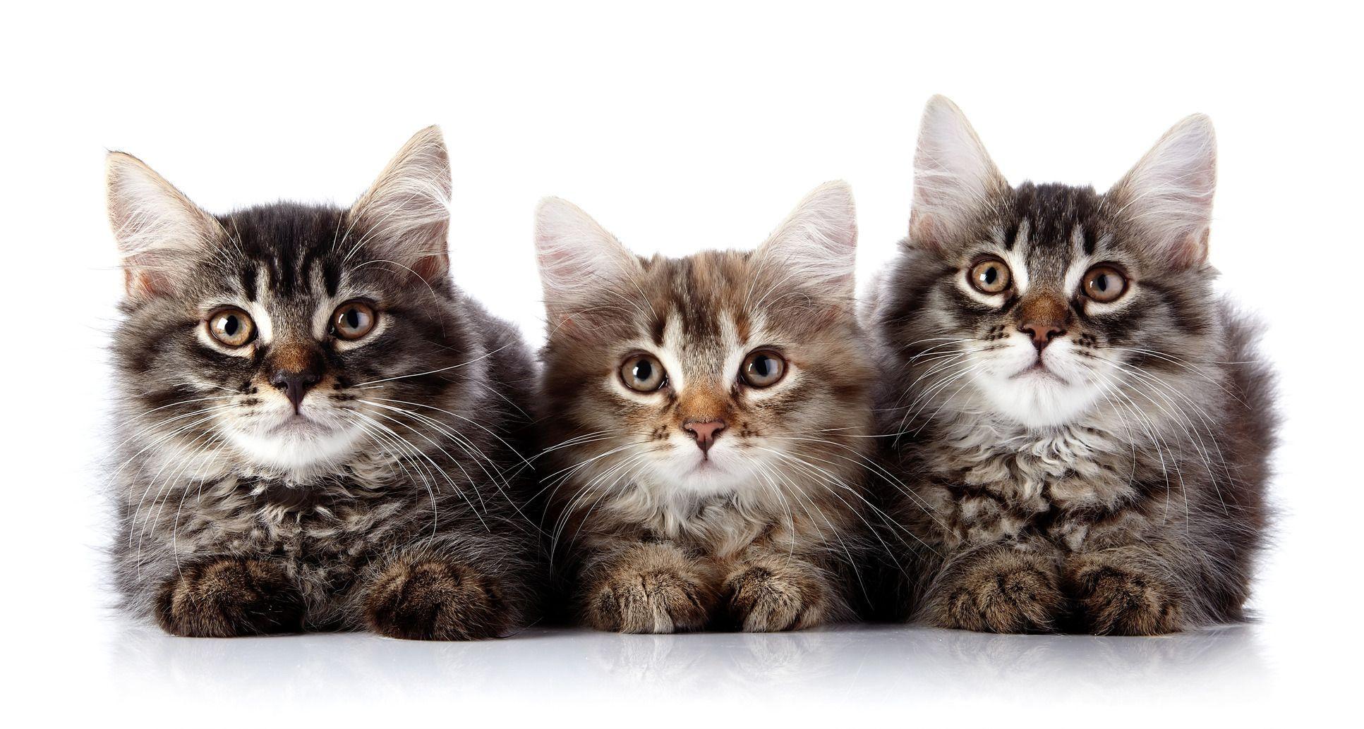 Chi vive con un gatto, vive meglio!
