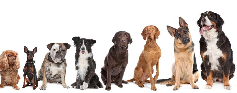 I cani sentono cose che noi non sentiamo?