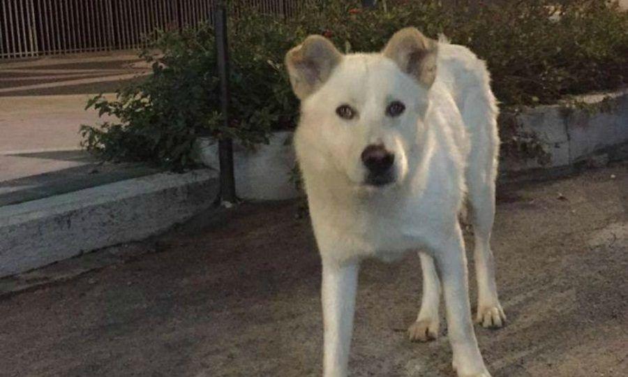 Il cane Angelo, barbaramente ucciso a Sangineto