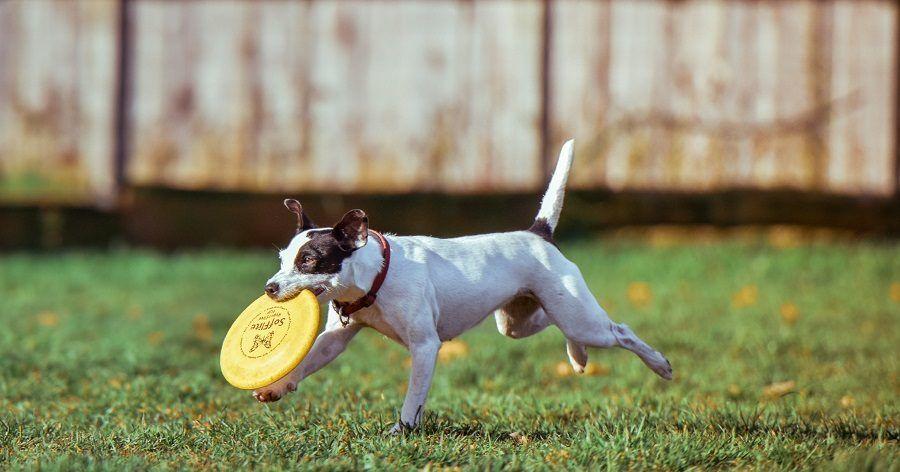 Io ti insegno a giocare col frisbee!