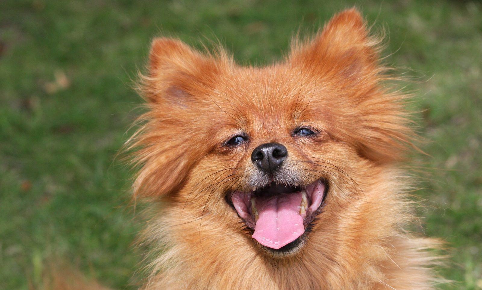 A che età un cane è adulto?