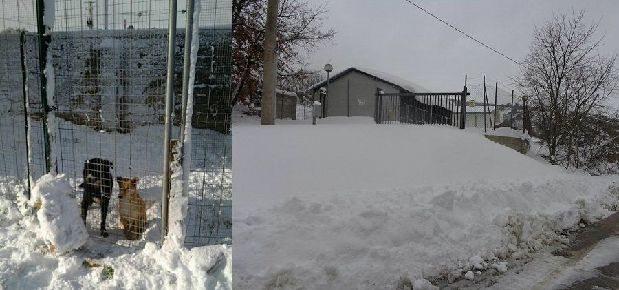 I canili sotto la neve