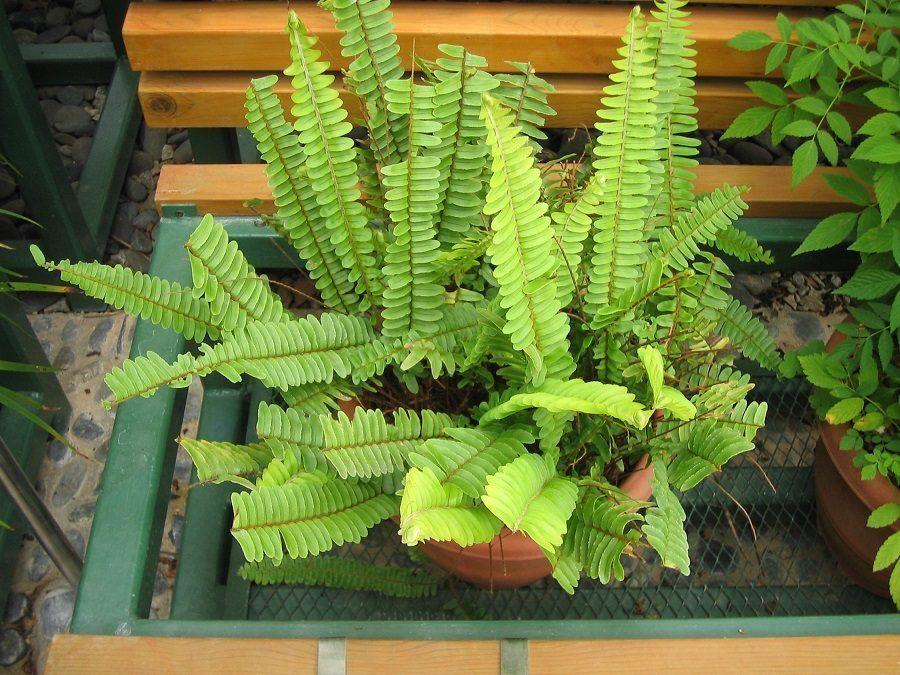 Casa buia abbellitela con queste piante che richiedono - Piante interno poca luce ...