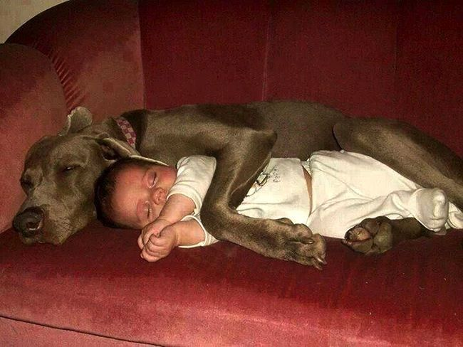 foto bambini animali02 (1)