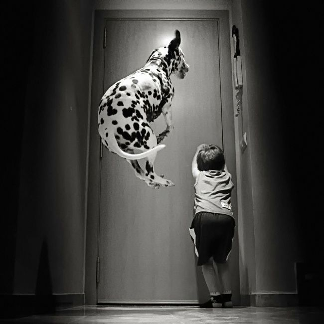 foto bambini animali09
