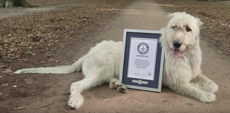 Una coda da Guinness dei Primati!