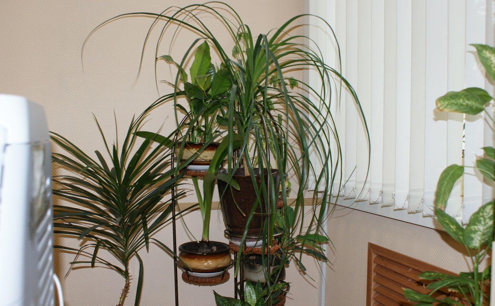 Piante Per Ufficio Poca Luce : Piante appartamento per zone ombrose con piante da interno poca