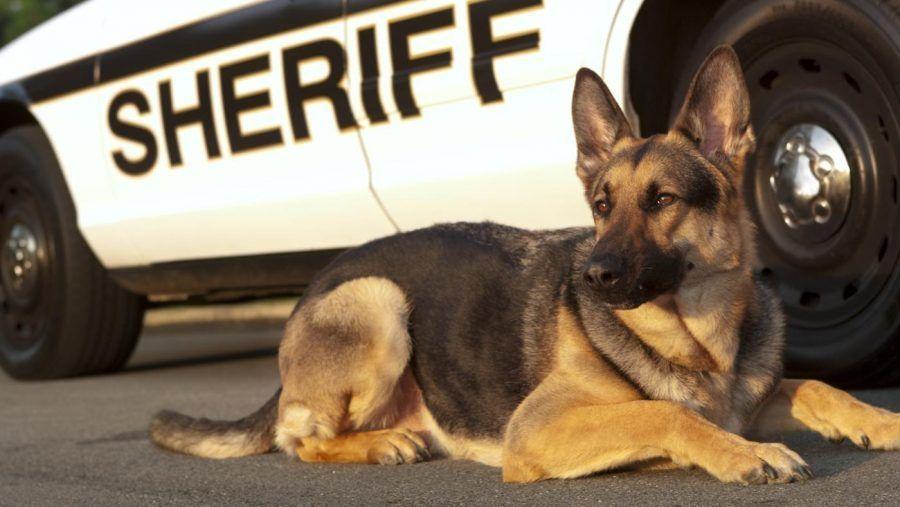 cani-poliziotto-adozione