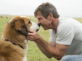 a-dog-s-purpose