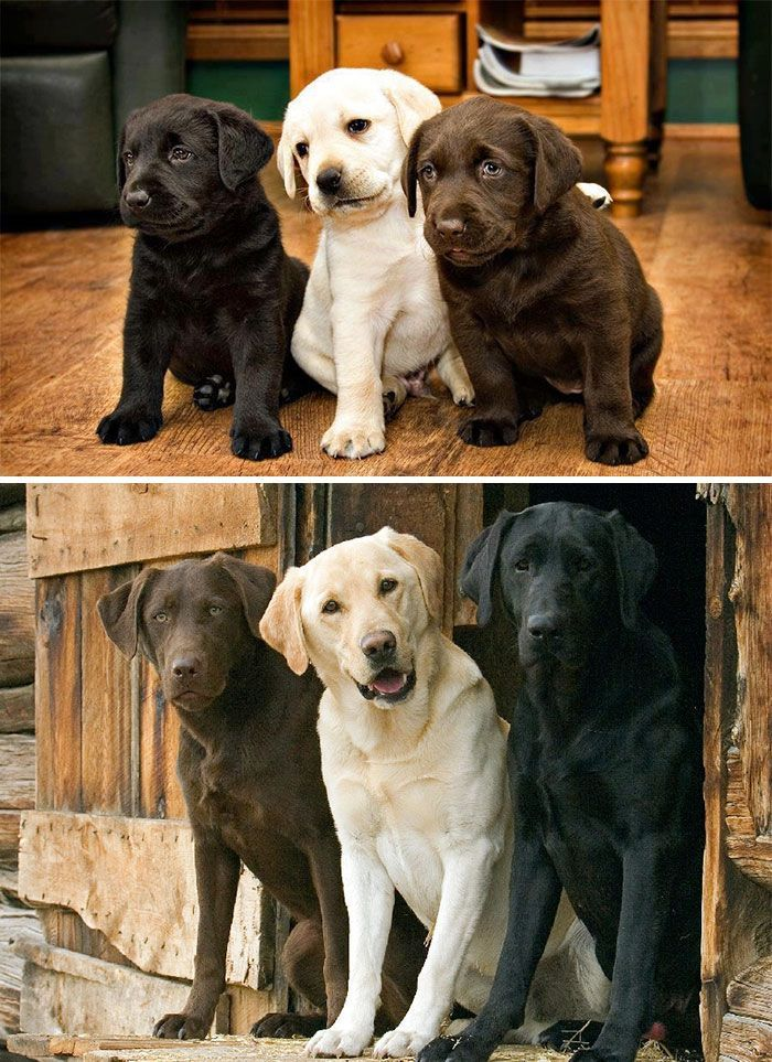 Tre cagnolini amici