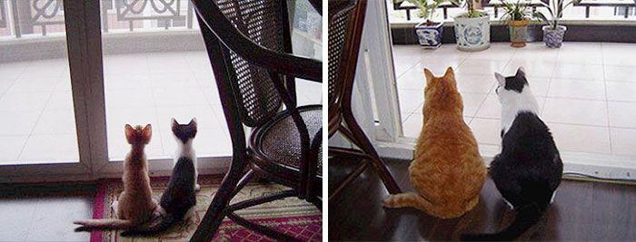 Due gatti curiosi...