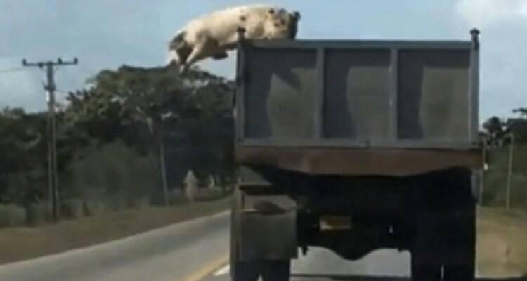 L'hanno vista lanciarsi dal camion in corsa, poi hanno scoperto...