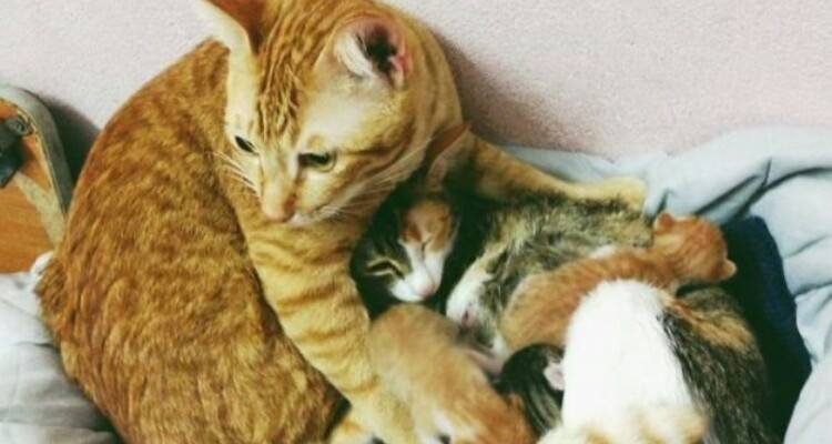L'amore di papà Yallo va oltre ogni limite, aiuta la sua compagna durante il parto