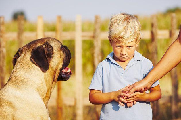 i-cani-percepiscono-le-paure